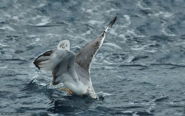 Ученые выяснили, почему пластик в океане привлекает птиц