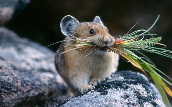 Ученые выяснили, как происходит пищеварение у мышей