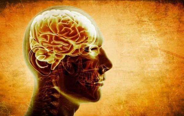 Ученые озучили биологические соединения, улучшающие память