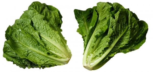 Листья салата могут стать причиной сальмонеллеза у человека