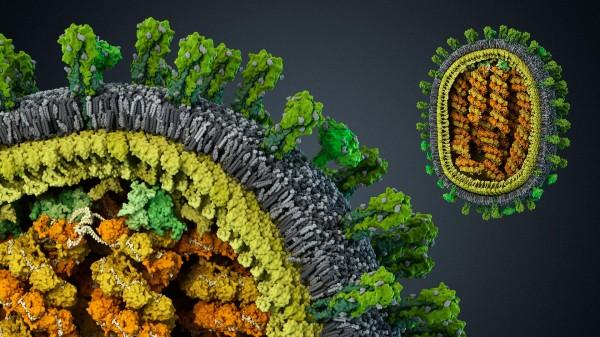Ученые: на Земле обитают тысячи неизвестных науке вирусов