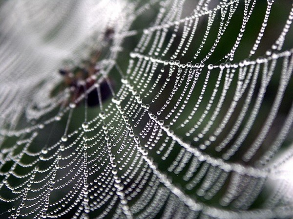 Ученые нашли среди пауков отцов-одиночек