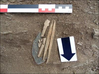 Ученые выяснили, откуда взялись скелеты