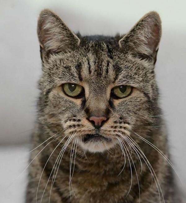ВСША пропал самый старый кот вмире покличке Вельвет