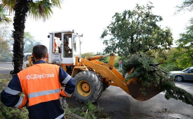 ВСочи из-за упавшего натрубу дерева без газоснабжения остались 950 человек