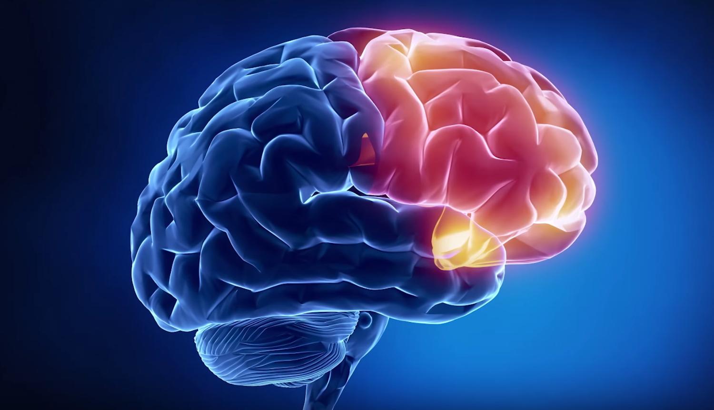 Ученые: Как ведет себя мозг при решении нескольких задач одновременно