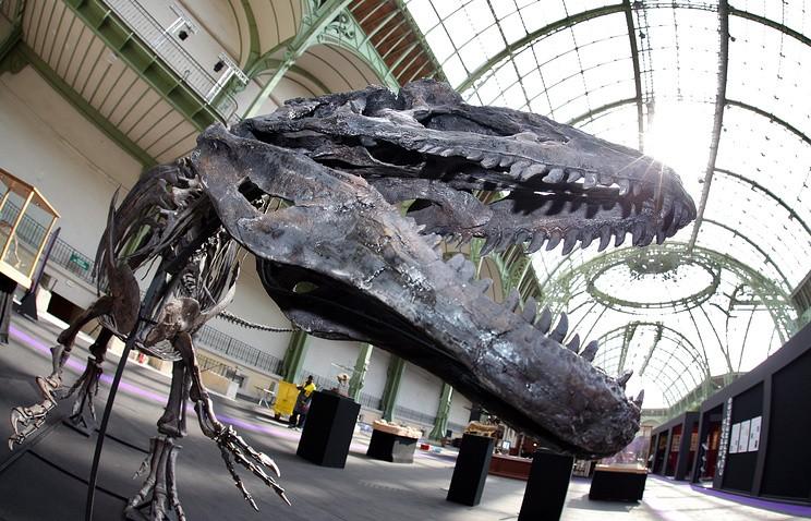 Скелет динозавра изЮрского периода продан за1,1 млн. евро