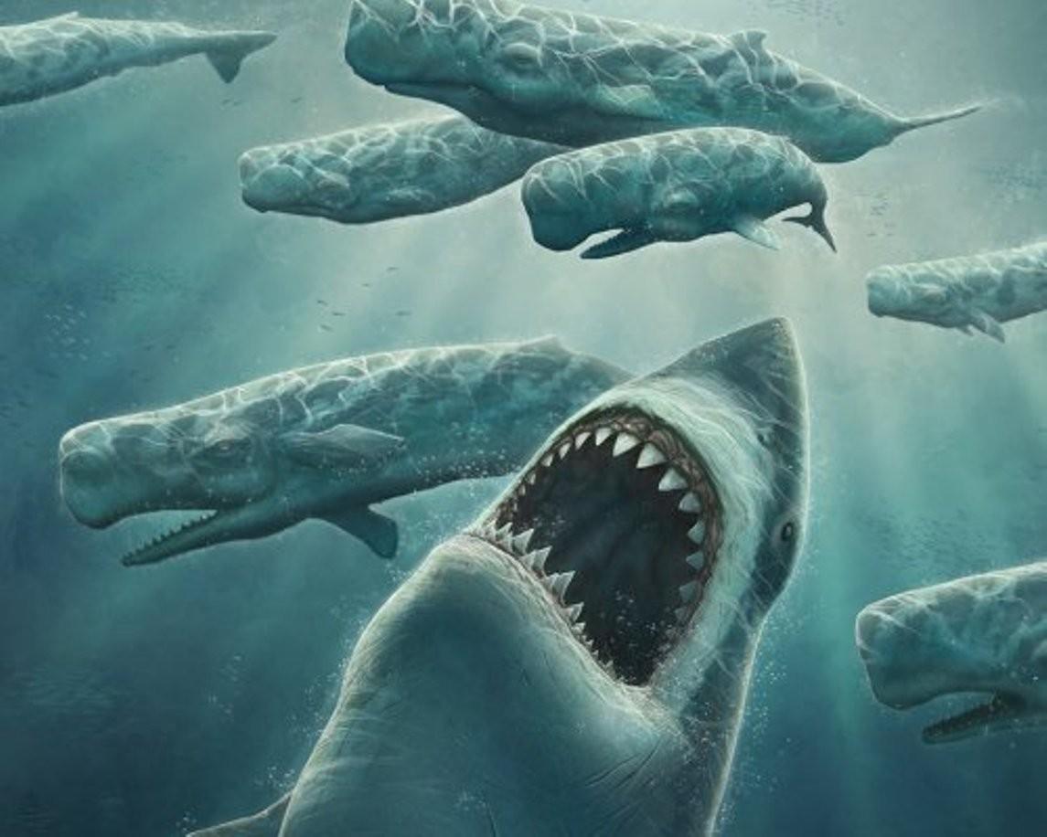 Останки древнейшей акулы обнаружили вреке вМексике