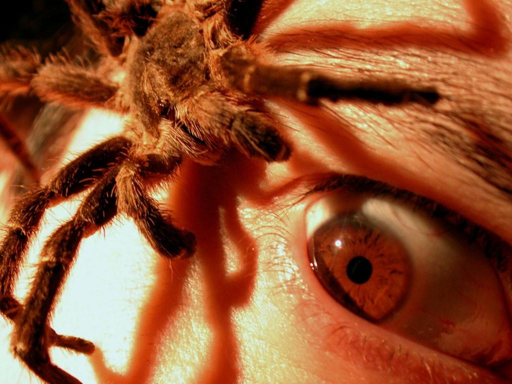 Ученые поведали, как гормоны избавят отстраха пауков