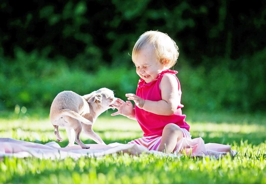 Домашние собаки уменьшают тревожность удетей— Ученые