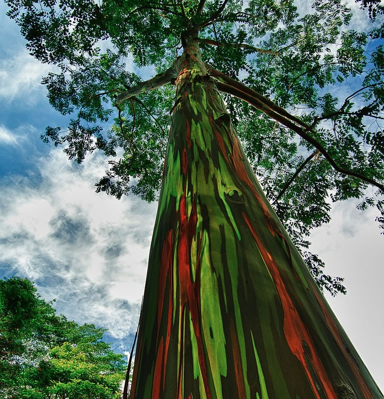 Насвадебную процессию упало дерево— катастрофа вСША