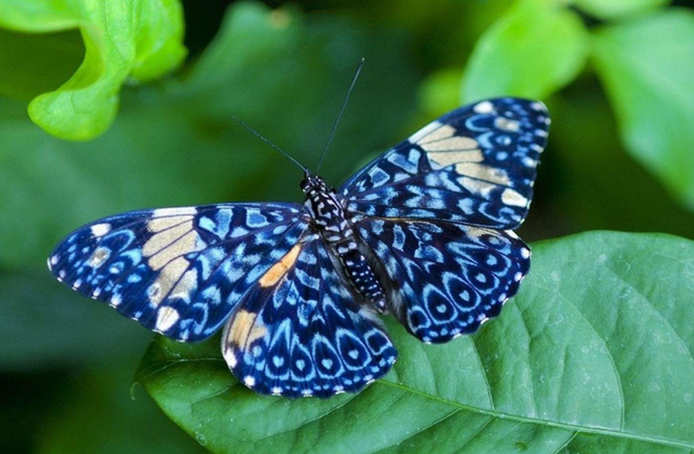 Биологи отыскали уживотных переходную зону, вкоторой начинается новый вид