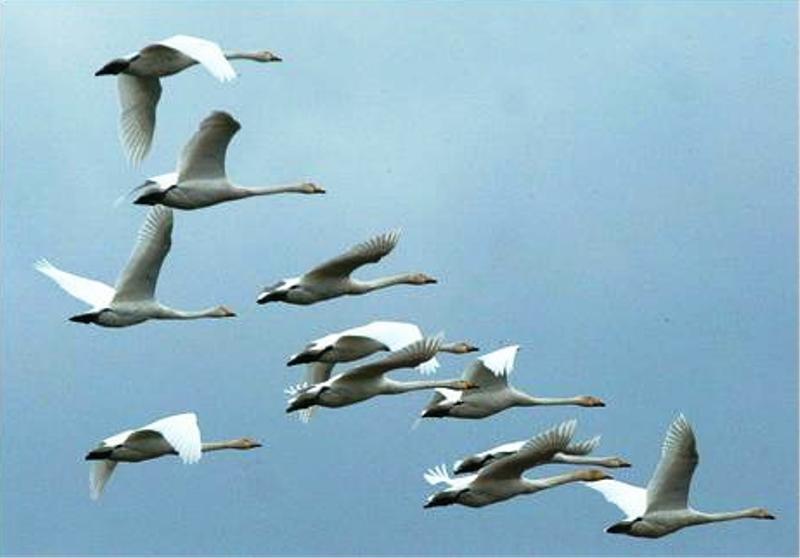 Ученые: Глобальное потепление заставило перелетных птиц ранее обычного возвращаться в близкие края