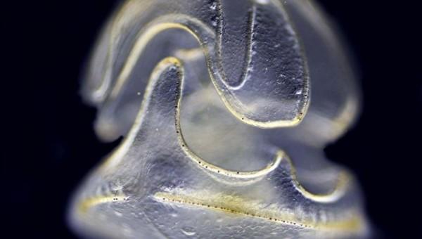 Учёные нашли существо с головой и без тела