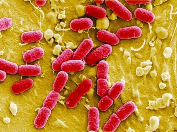 Ученые: Опасные микроорганизмы щадят женщин