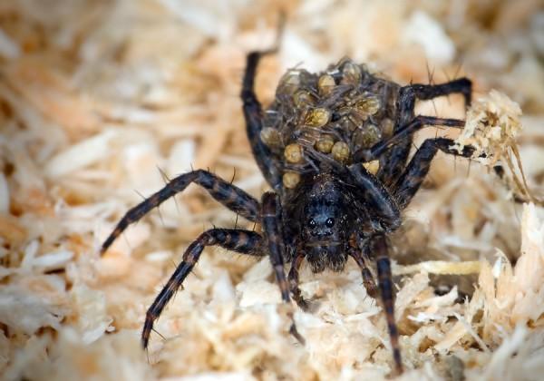 Ученый из Алтая открыл ранее неизвестный род пауков