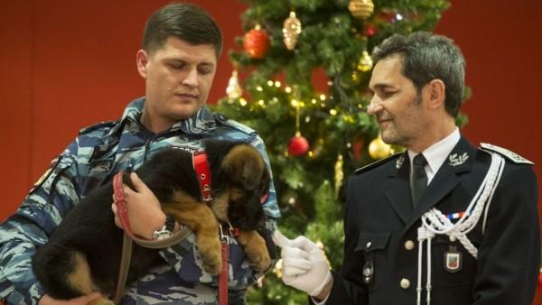 Подаренного Франции пса Добрыню из России забраковали для службы в полиции