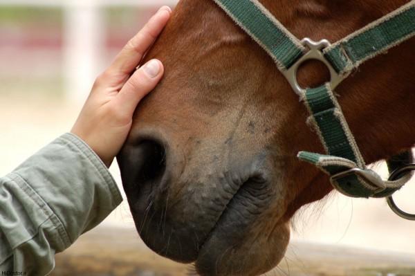 Лошади призывают на помощь человека в критической ситуации