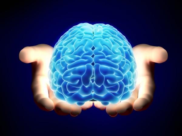 Ученые: голодный мозг способствует максимальной продуктивности