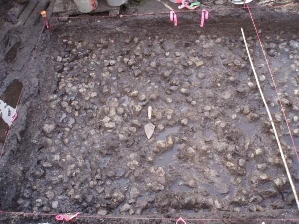 В Канаде ученые обнаружили картофель возрастом 3,8 тыс. лет
