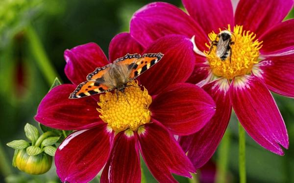 Учёные: В Великобритании из-за погоды сократилась популяция шмелей и бабочек