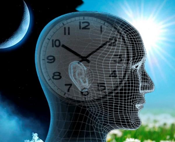 Ученые: Людям стоит больше доверять «внутренним» часам