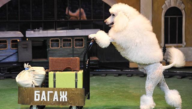 Новое строение для театра зверей Дурова будет выстроено в российской столице