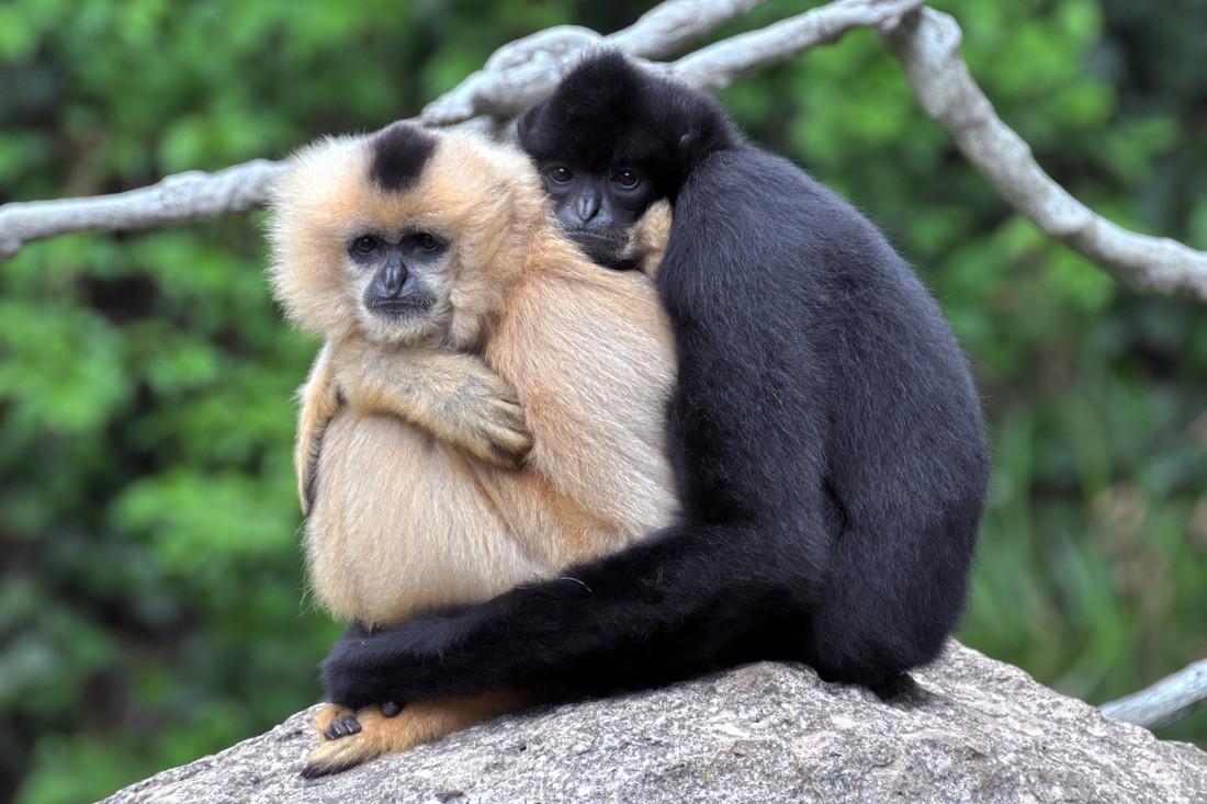 Ученые назвали новый вид приматов вчесть главного героя «Звездных войн»