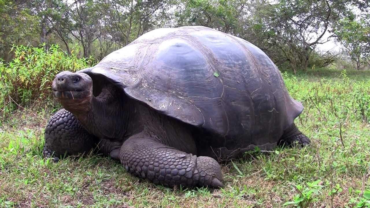 ВСША 68-килограммовая домашняя черепаха устроила пожар в 2-х домах
