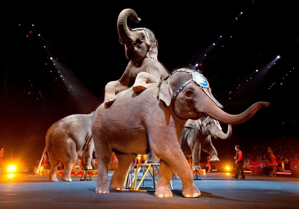 Закрывается старейший вмире передвижной цирк