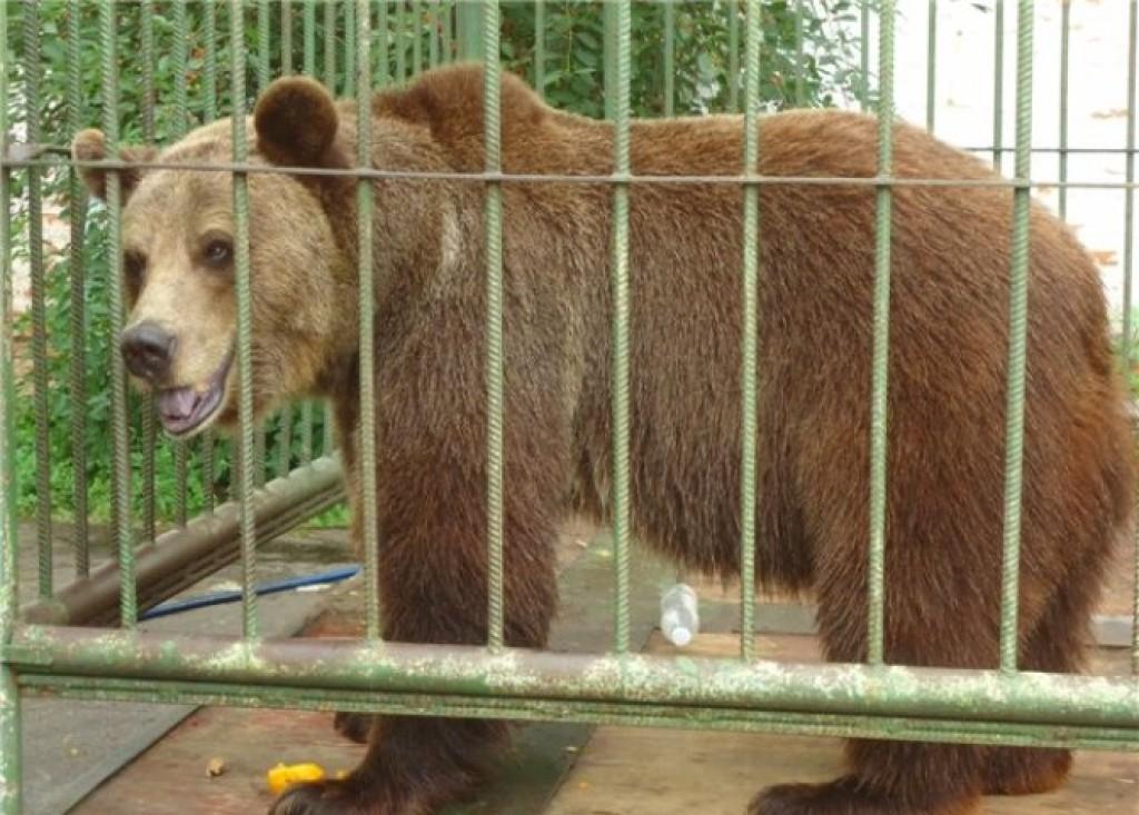Немалый 423-килограммовый медведь нарисовал коллекцию картин квыставке