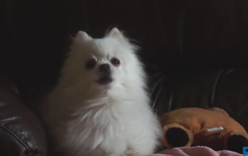 Винетернете попрощались составшим мемом псом-певцом Гейбом