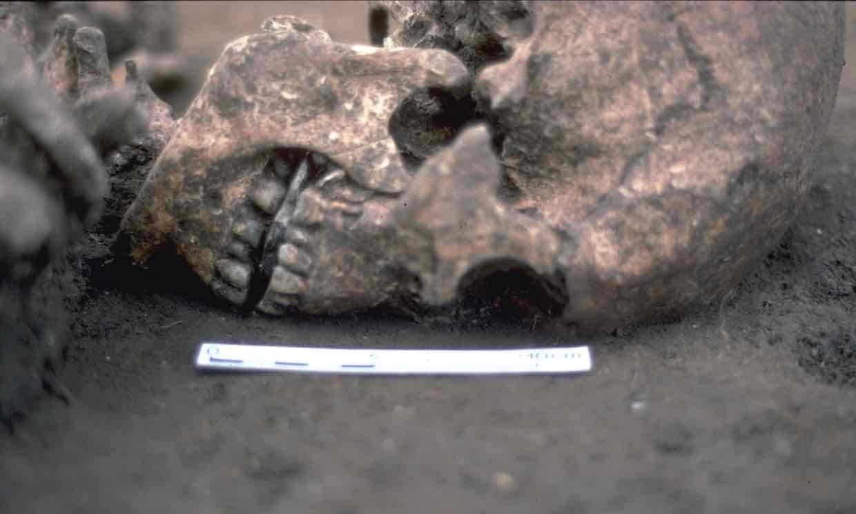 Шокирующая находка: у старинного скелета вместо языка— камень