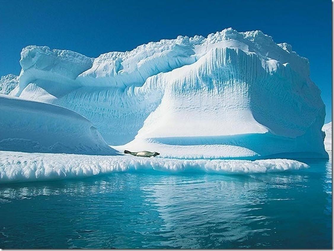 Новосибирский морж задумал совершить заплыв наСеверном полюсе
