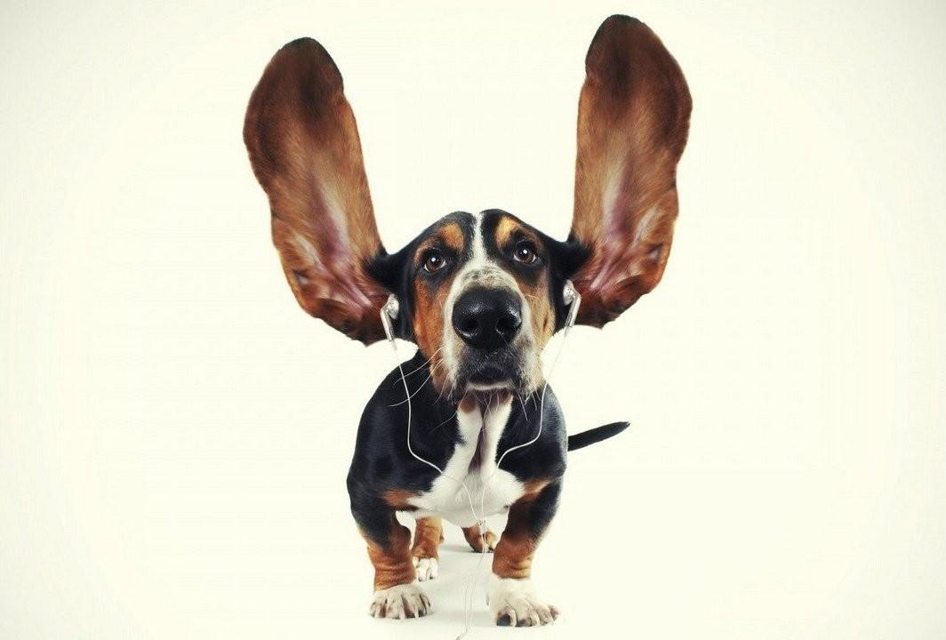 Собаки больше всего любят регги— Исследование