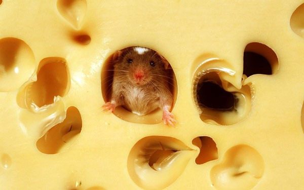 Пища впроцессе болезни ускоряет выздоровление— Ученые