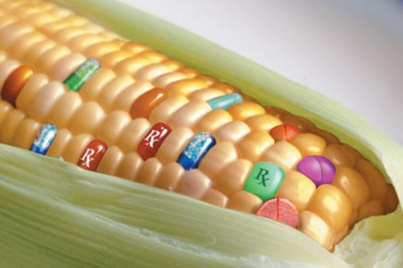 Ученые: ГМО не небезопасны для человека