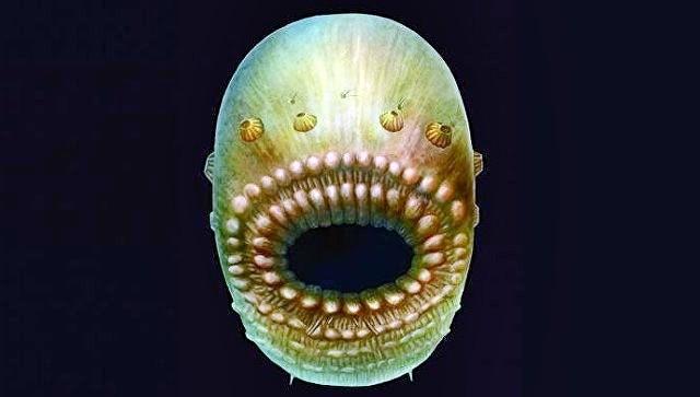 Ученые обнаружили древнего предка человека, который похож на«зубастый мешок»