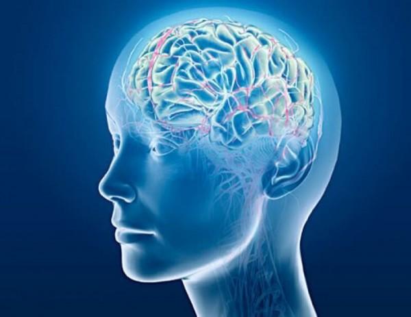 Учёные: Двуязычие полезно для человеческого мозга