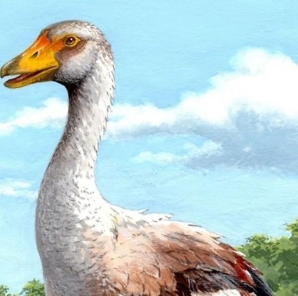 В Италии ученые обнаружили останки гигантского гуся