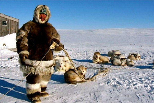 a look at the native inhabitants of the coastal greenland areas in the arctic the inuit The polar bear is a rare visitor to inhabited areas, and is only often seen in remote hunting grounds in north and east greenland wolves, arctic foxes, mountain hares and other small land mammals are also to be found, but are not often seen close to civilisation.