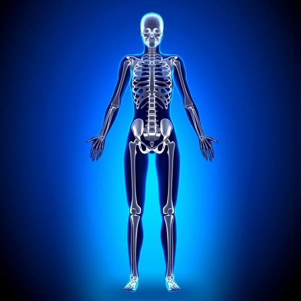 Изучение женского скелета во время менопаузы поможет предотвратить переломы