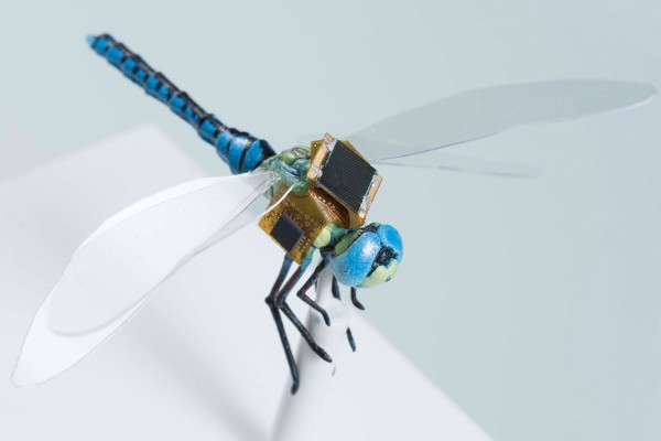 Ученые спроектировали первую в мире генетически модифицированную киборг-стрекозу