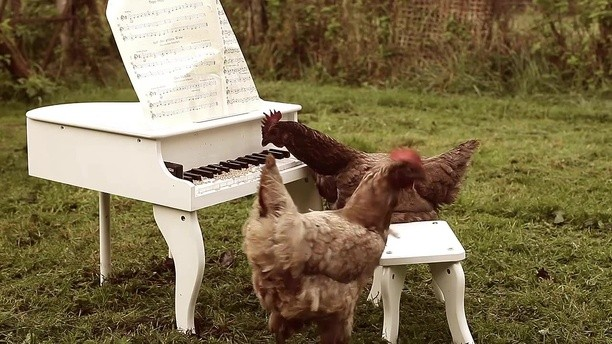 Курица исполнила американскую патриотическую песню