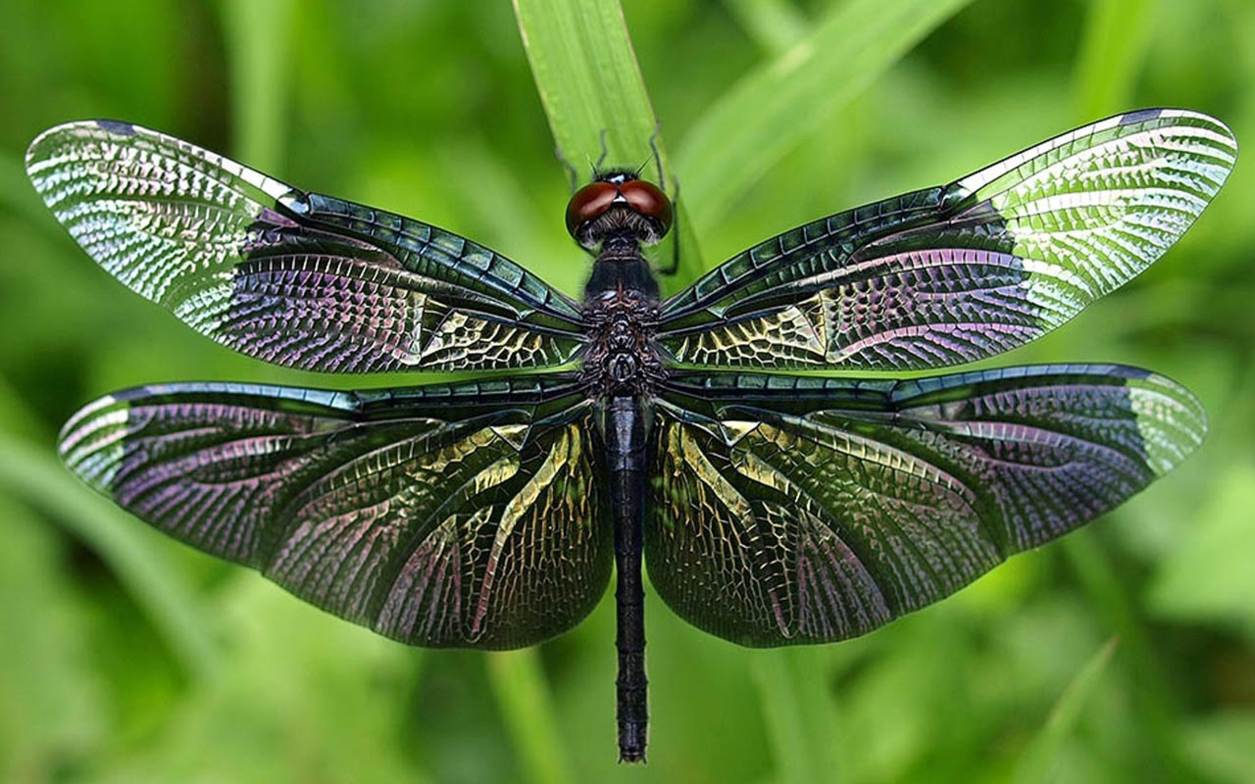 Спроектирован проект посозданию насекомых-киборгов— Ученые