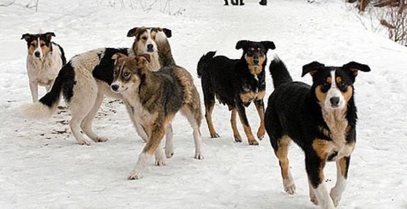 Собаки загрызли 7-летнюю девочку вСвердловской области