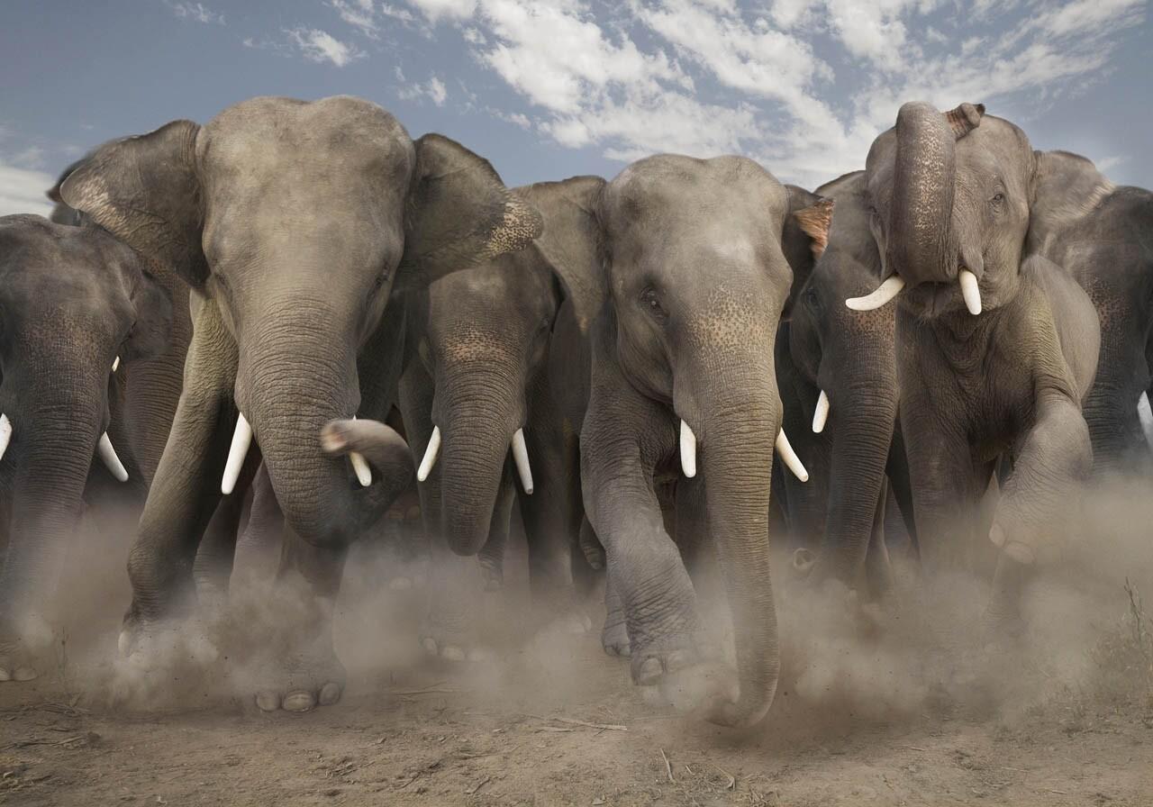 Голодные игры в«Поднебесной»: слоны захватили поселок впоисках пищи