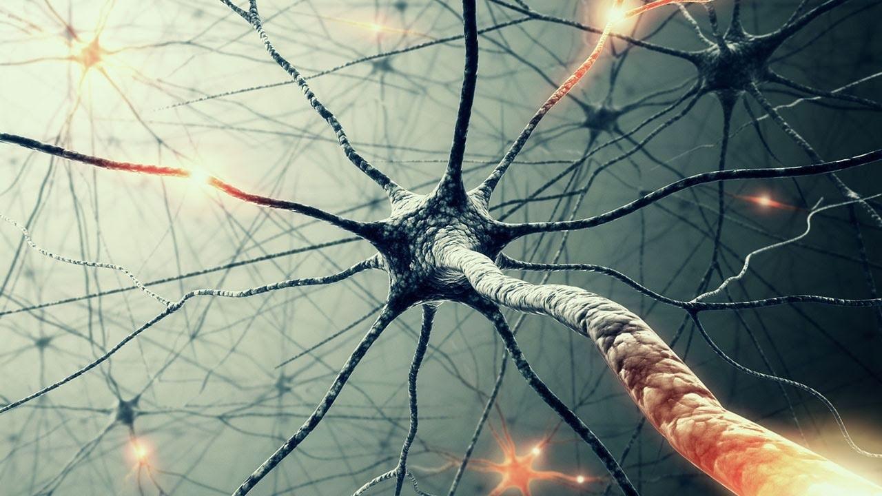 Ученые отыскали новый общий механизм работы Интернета имозга человека