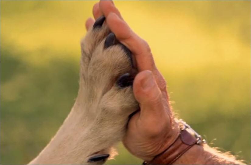 Собаки иобезьяны нехотят дружить сэгоистами— Ученые