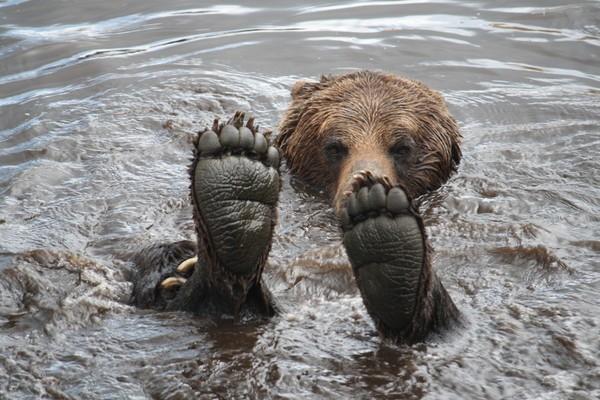 Неменее 40 медвежьих лап обнаружили впоезде, следовавшем из Российской Федерации в КНР